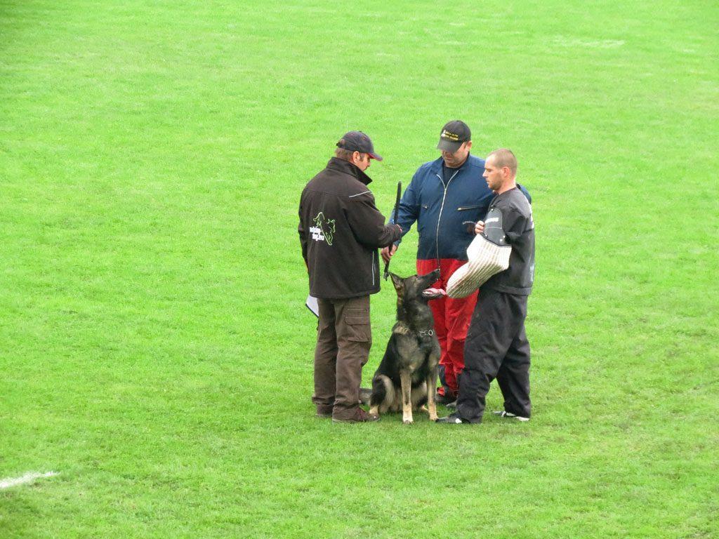 Enrico Alen's Hof, Dog Trainer Croatia