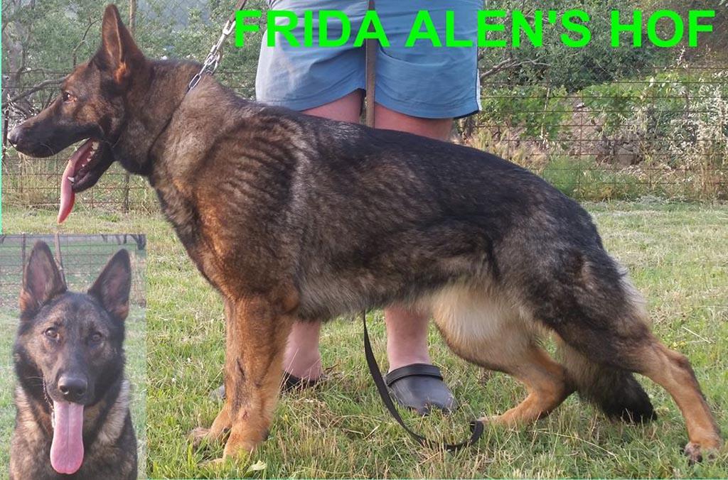 FRIDA ALENS HOF, Dog Trainer Croatia