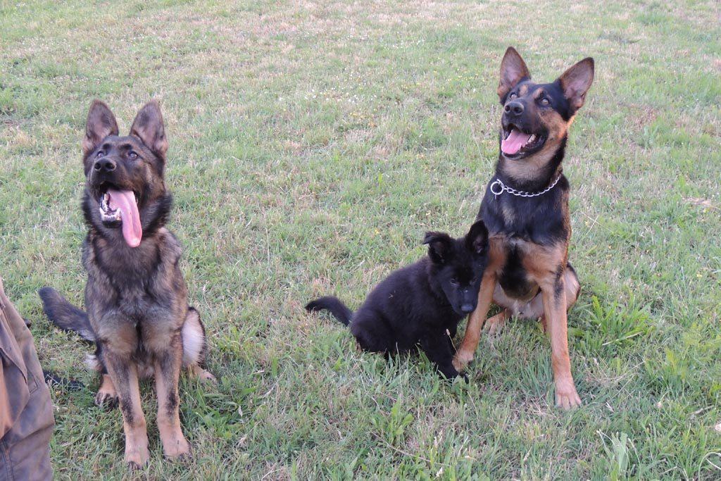 Pansion za pse, Dog Trainer Croatia